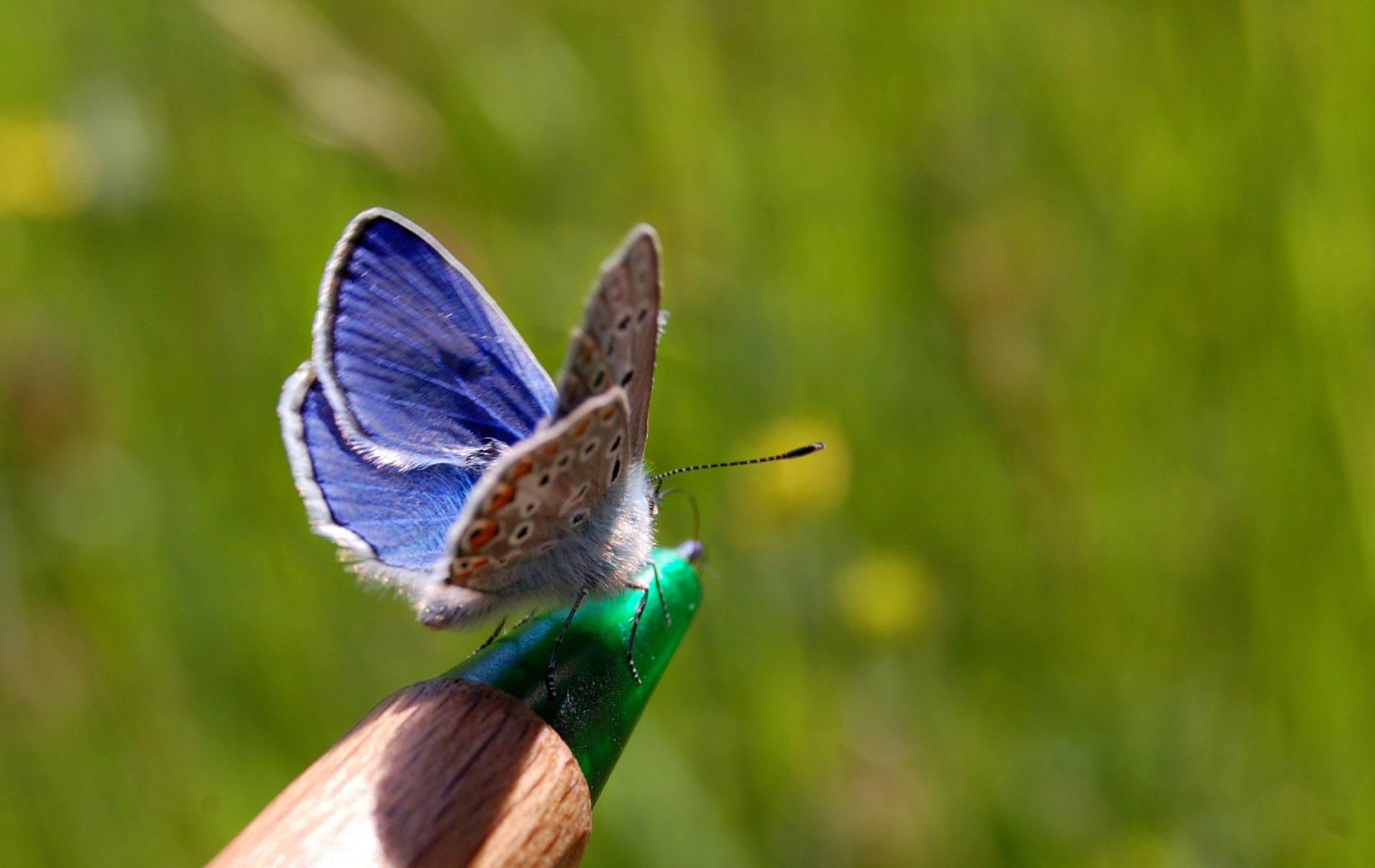 Fachartikel Insektenschutz ist Gesetz