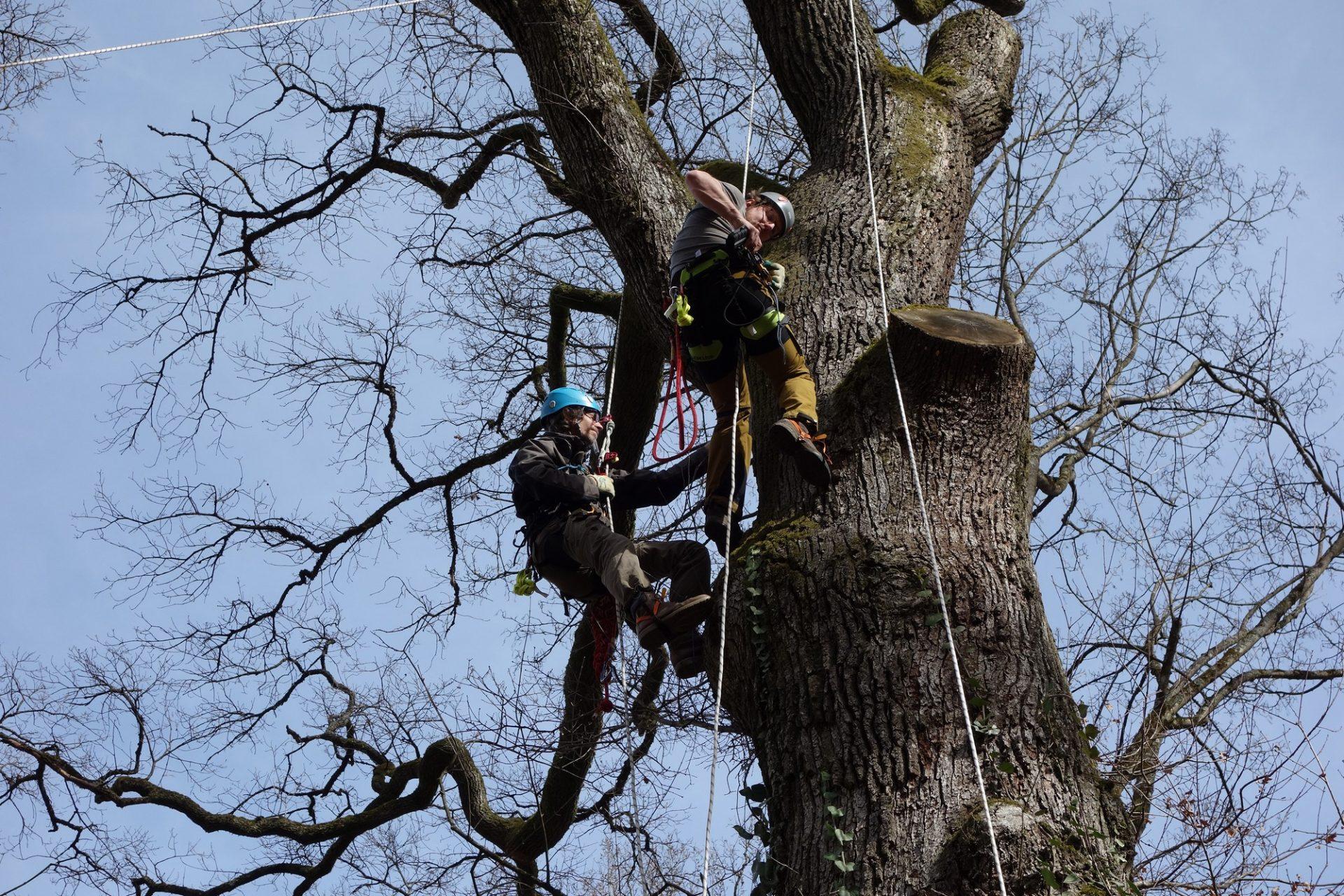 Baumkontrollen mittels SKT