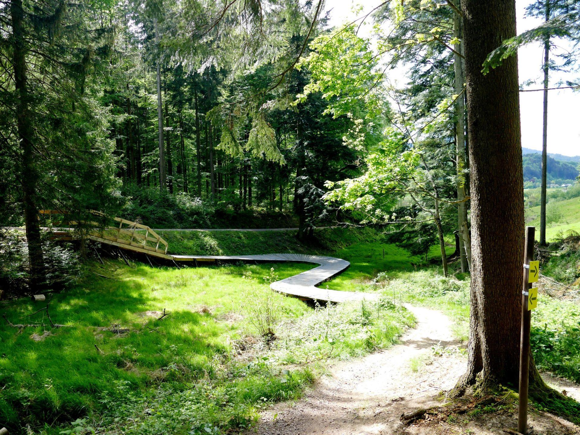 Freiburg, Hexenwald-Trailpark
