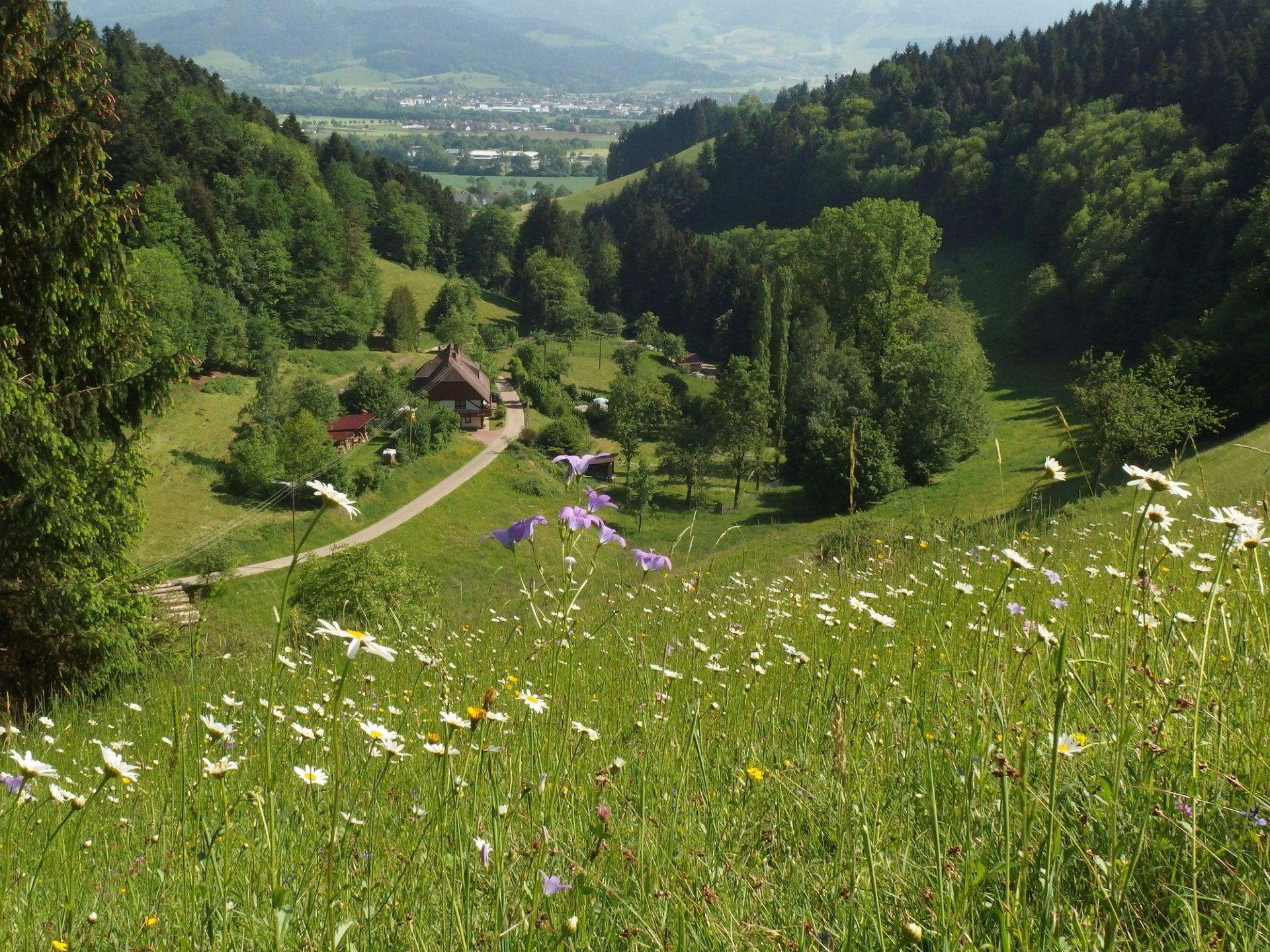 MaP Kandelwald Roßkopf Zartener Becken