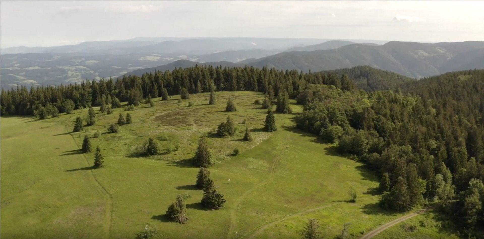 FFH-Gebiet Kandelwald, Roßkopf, Zartener Becken